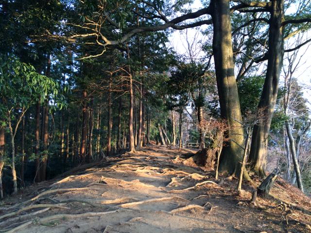 iiyama-trail_2