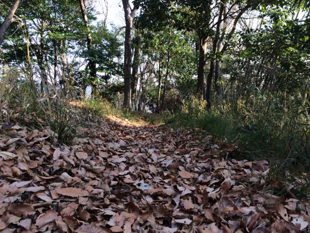 iiyama-trail_3
