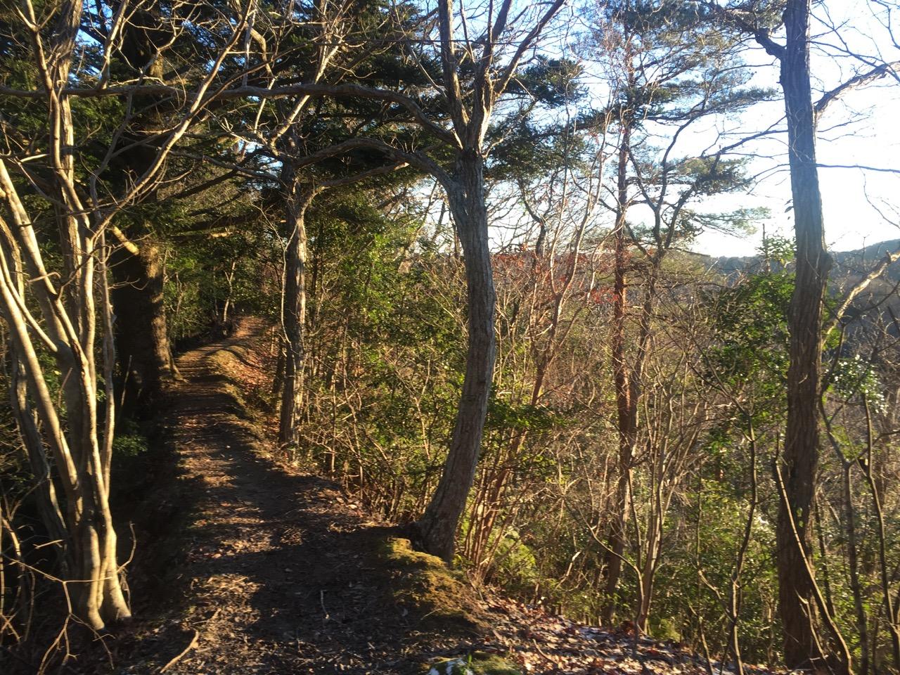 懐かしの清和県民の森トレイル